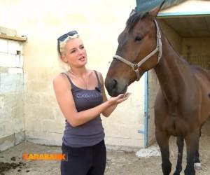 RMJ Horse Rescue