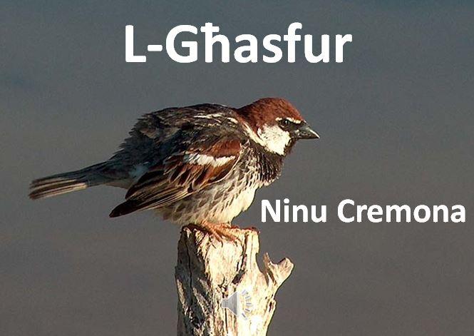 L-Għasfur