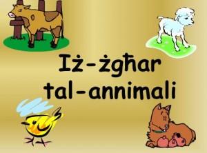 Iz-zghar tal-annimali