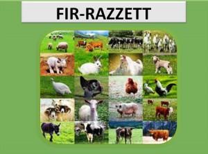 Fir-razzett2