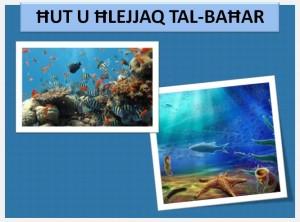 Hut u hlejjaq tal-bahar2