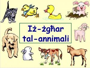 annimali-zghar-1