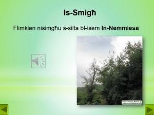 In-Nemmiesa-Maria Grech